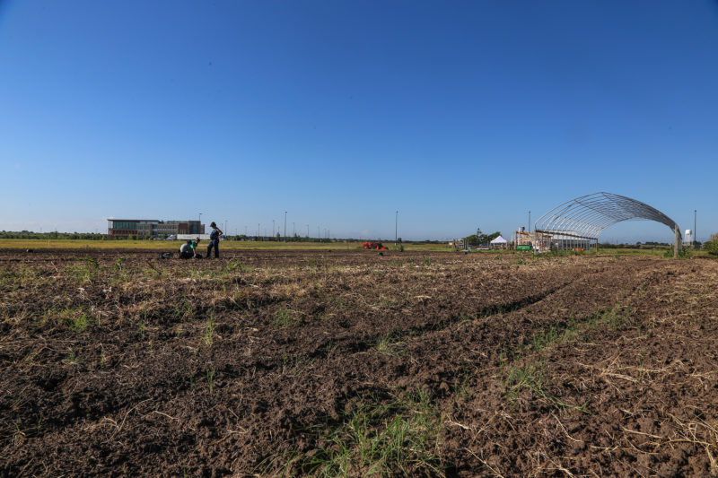 ACC Sustainable Student Farm field